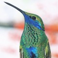 Google Hummingbird Explained