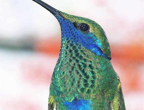 Google Hummingbird Update and What It Means To You